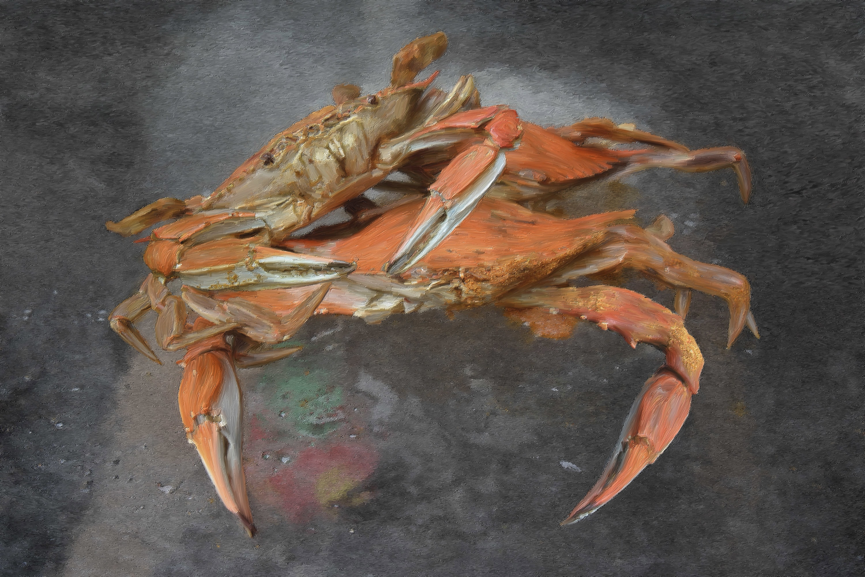 crab1_surface